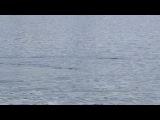 Плавание   с  маской  и  трубкой 2011