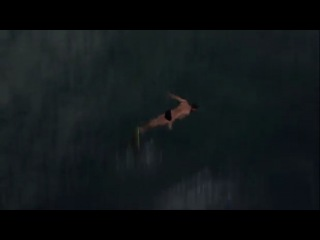 Highlights from Red Bull Cliff Diving World Series finale